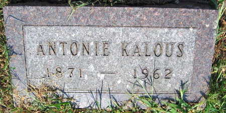 KALOUS, ANTONIE - Linn County, Iowa | ANTONIE KALOUS
