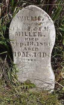 MILLER, WILLIE - Louisa County, Iowa   WILLIE MILLER