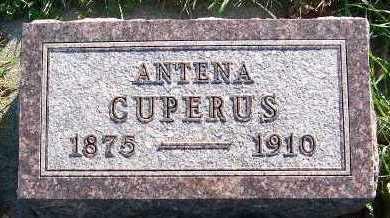 CUPERUS, ANTENA - Sioux County, Iowa | ANTENA CUPERUS