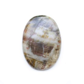 Petrified Wood 42x30mm Oval Cabochon