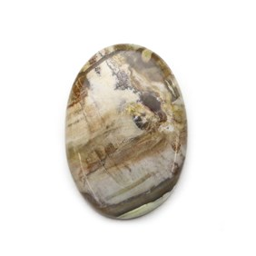 Petrified Wood 37x26mm Oval Cabochon