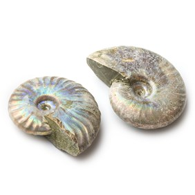 Madagascan Opalised Natural Fossil Ammonite