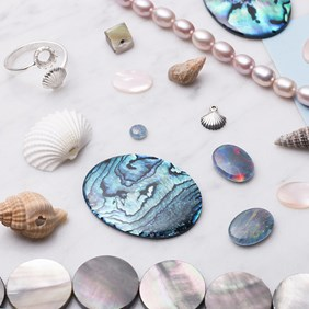 The Sea Shell Collection