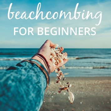 beachcombing for beginners