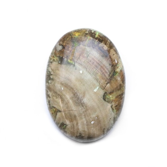 Petrified Wood 34x25mm Oval Cabochon