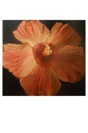Ibiscus Francesca Cesarini | 20000003 | CESARINI5IBISCUS