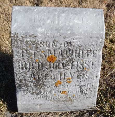 WHITE, JAMES DALLAS - Worth County, Missouri | JAMES DALLAS WHITE - Missouri Gravestone Photos