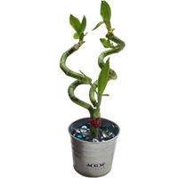 Bamboo-gift