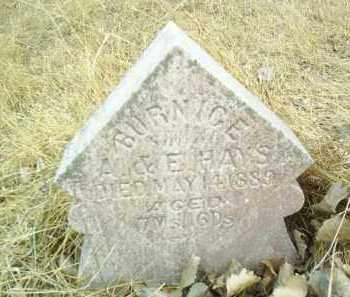 HAYS, BURNICE - Antelope County, Nebraska | BURNICE HAYS - Nebraska Gravestone Photos