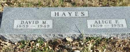 FOSTER HAYES, ALICE - Fillmore County, Nebraska | ALICE FOSTER HAYES - Nebraska Gravestone Photos