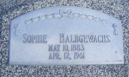 HALBGEWACHS, SOPHIE - Frontier County, Nebraska | SOPHIE HALBGEWACHS - Nebraska Gravestone Photos