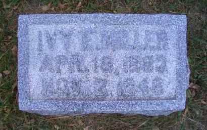 MILLER, IVY E - Madison County, Nebraska | IVY E MILLER - Nebraska Gravestone Photos