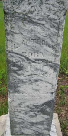 ANTHONY, LEVI - Saline County, Nebraska   LEVI ANTHONY - Nebraska Gravestone Photos
