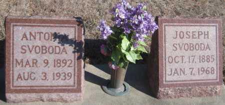 SVOBODA, ANTONIA - Saline County, Nebraska | ANTONIA SVOBODA - Nebraska Gravestone Photos