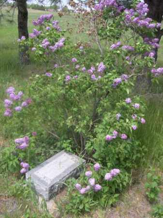 DONOHUE, BERNARD J. - Sioux County, Nebraska | BERNARD J. DONOHUE - Nebraska Gravestone Photos