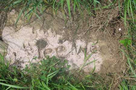 UNKNOWN, PEE WEE - Thurston County, Nebraska | PEE WEE UNKNOWN - Nebraska Gravestone Photos