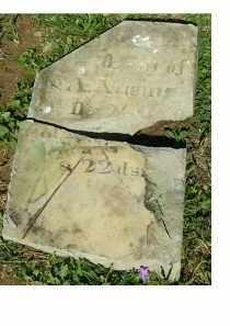NEWMAN, WM. Q. - Adams County, Ohio | WM. Q. NEWMAN - Ohio Gravestone Photos