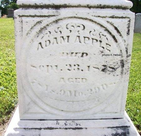 APPLE, ADAM - Champaign County, Ohio | ADAM APPLE - Ohio Gravestone Photos