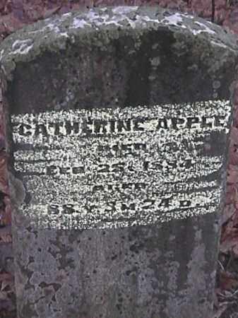 APPLE, CATHERINE - Champaign County, Ohio | CATHERINE APPLE - Ohio Gravestone Photos