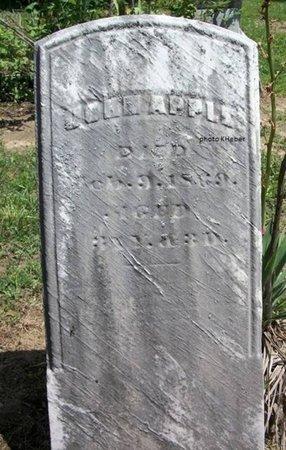 APPLE, JOHN - Champaign County, Ohio   JOHN APPLE - Ohio Gravestone Photos