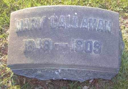 CALLAHAN, MARY - Columbiana County, Ohio | MARY CALLAHAN - Ohio Gravestone Photos