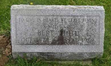 WHITE, BERT - Delaware County, Ohio | BERT WHITE - Ohio Gravestone Photos