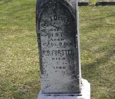 FORSTER, ANN - Erie County, Ohio | ANN FORSTER - Ohio Gravestone Photos