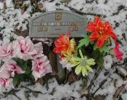 KELLY SHAFFER, SHIRLEY - Gallia County, Ohio | SHIRLEY KELLY SHAFFER - Ohio Gravestone Photos