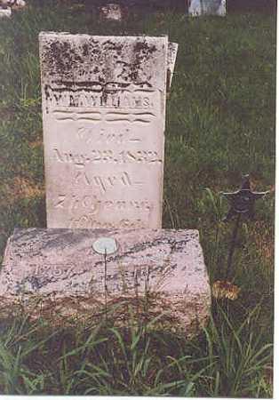 WILLIAMS, WILLIAM - Gallia County, Ohio | WILLIAM WILLIAMS - Ohio Gravestone Photos
