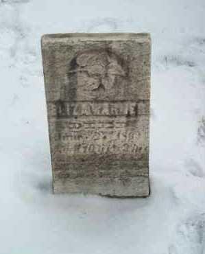 WARNER, ELIZA - Harrison County, Ohio | ELIZA WARNER - Ohio Gravestone Photos