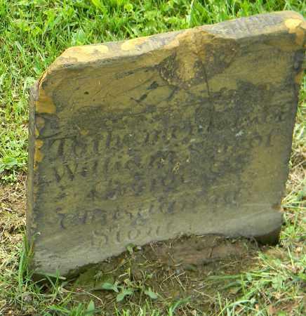 STOUT, WILLIAM - Holmes County, Ohio | WILLIAM STOUT - Ohio Gravestone Photos