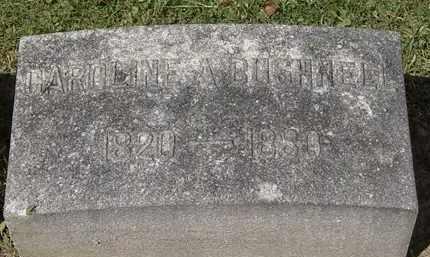 BUSHNELL, CAROLINE - Lorain County, Ohio | CAROLINE BUSHNELL - Ohio Gravestone Photos