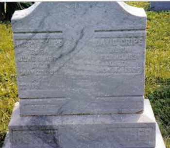 CRIPE, DAVID - Montgomery County, Ohio | DAVID CRIPE - Ohio Gravestone Photos