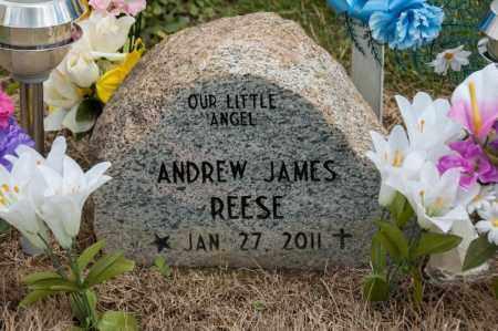 REESE, ANDREW JAMES - Richland County, Ohio   ANDREW JAMES REESE - Ohio Gravestone Photos