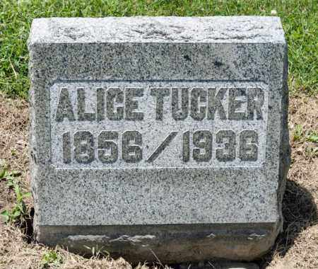 TUCKER, ALICE ELVERA - Richland County, Ohio | ALICE ELVERA TUCKER - Ohio Gravestone Photos