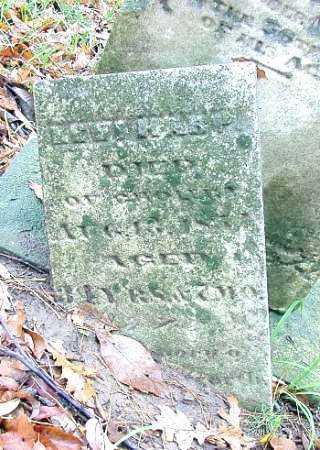 HARP, LEVI - Shelby County, Ohio | LEVI HARP - Ohio Gravestone Photos