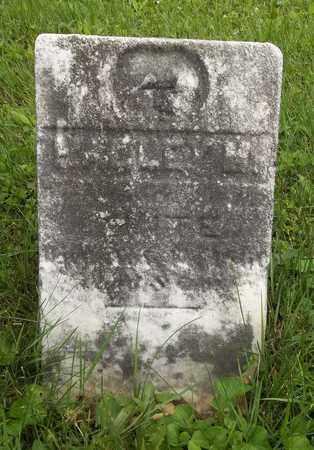 WHITE, HALLEY M. - Trumbull County, Ohio   HALLEY M. WHITE - Ohio Gravestone Photos