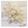 Organic Wheat Protein Image