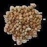 Buckwheat Image