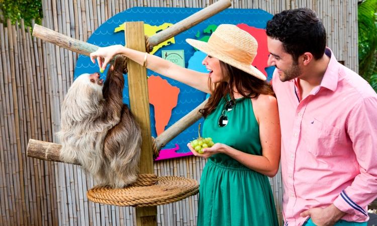 Palm Beach Zoo Animal Experiences - Sloth