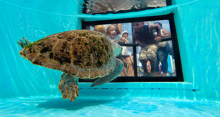 Loggerhead Marinelife Center MOSAIC 2019