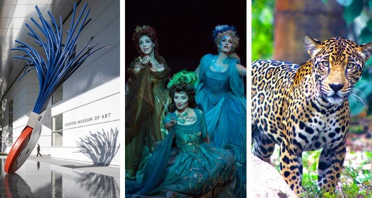 Norton Museum Palm Beach Opera Palm Beach Zoo