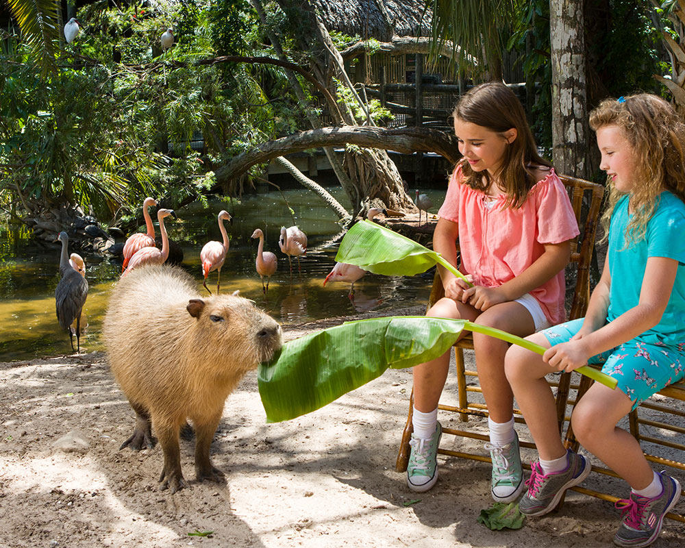 """Head to Palm Beach Zoo for a """"Happy Capy"""" Experience and more!"""
