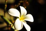 White Flower Closeup - Public Domain Pictures