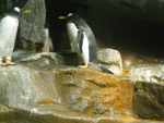 Penguin Sea World - Public Domain Pictures