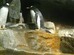 Penguin Sea World - Public Domain Pictures