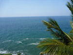 1202-palm-trees-dark-blue-sea - Public Domain Pictures