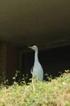 White Bird - Public Domain Pictures