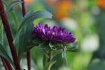 Violet Yellow Flower Side - Public Domain Pictures