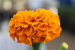 Yellow Orange Flower Lovely - Public Domain Pictures